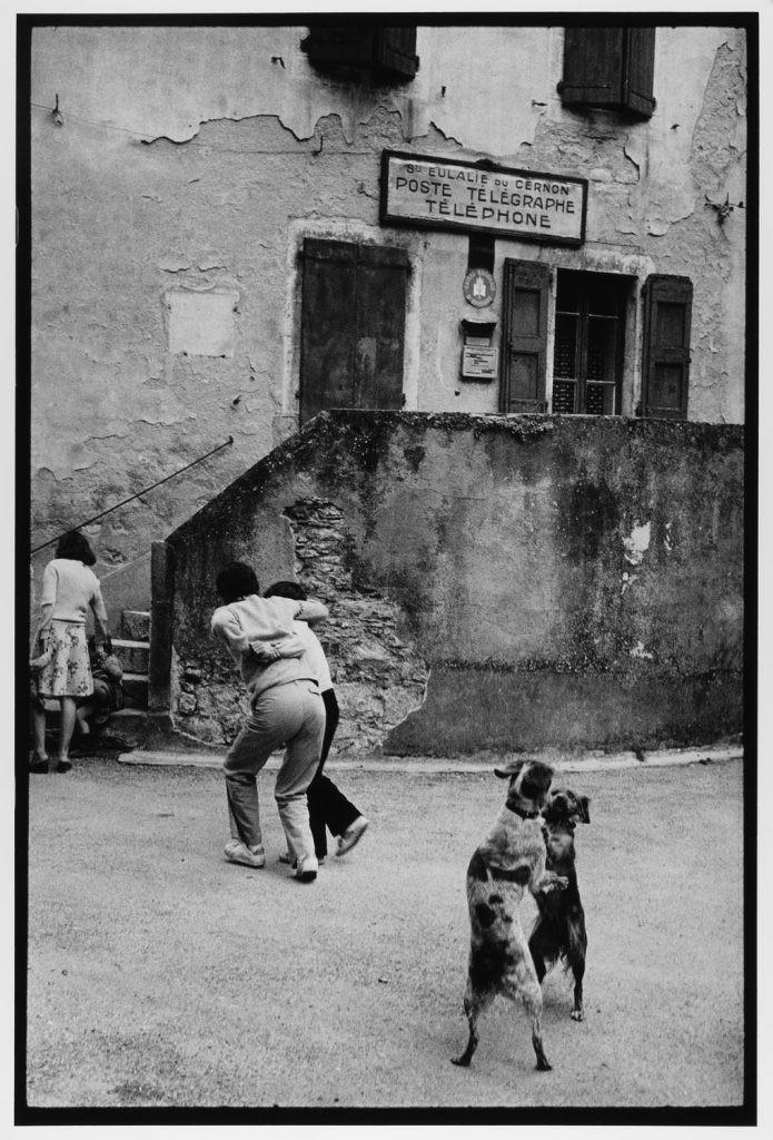 Собаки танцуют на Лазурном берегу, Франция, 1980. Фотограф Леонард Фрид