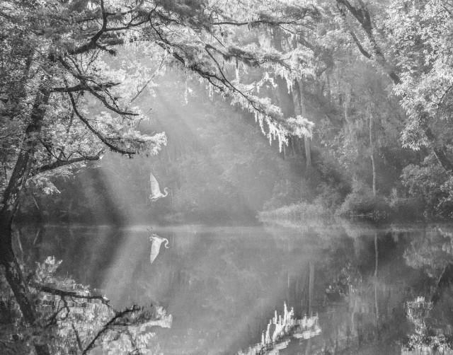 3-е место в категории «Природа» среди любителей, 2019. «Болотная идиллия». Автор Кэролайн Пеппиатт