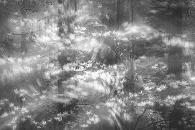1-е место в категории «Природа» среди профессионалов. «Когда лес шелестит». Фотограф Шарлотта Гибб