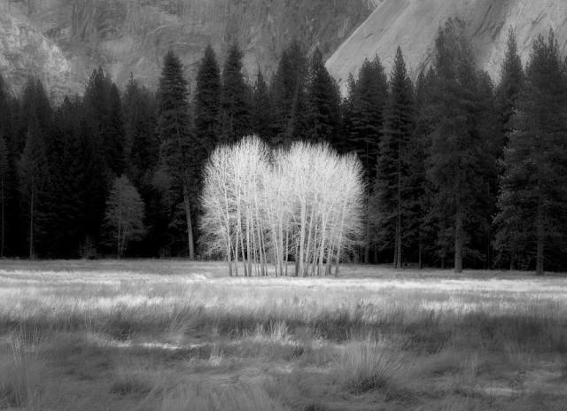 Почётное упоминание в категории «Пейзажи» среди профессионалов. Тополиная роща в Йосемитской долине. Фотограф Шарлотта Гибб