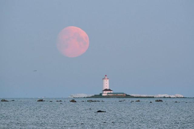 Толбухин маяк на фоне заходящей луны. Кадр сделан с территории форта Риф (Кронштадт) на рассвете. Фотограф Иван Михайлов