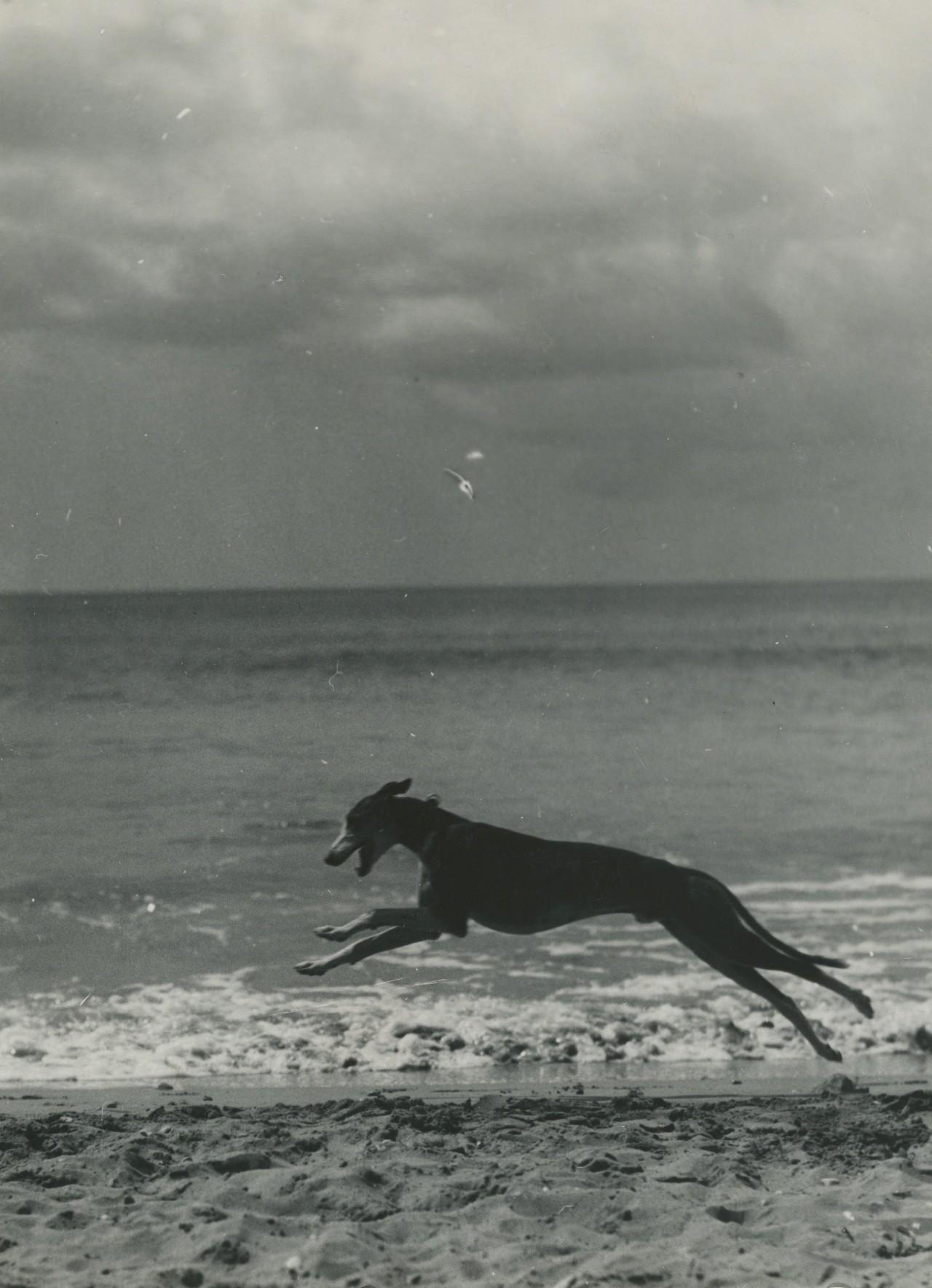 Собака на пляже. Фотограф Билл Брандт