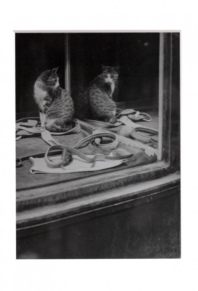 Кот и зеркало, около 1938. Фотограф Брассаи