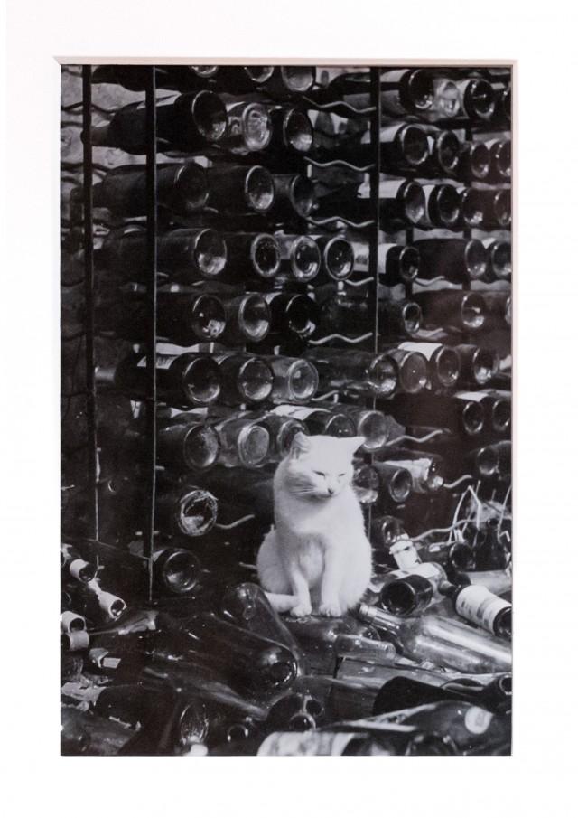 Кошка в погребе. Фотограф Брассаи
