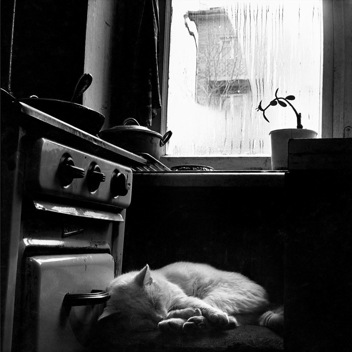 Кот на кухне, 1981. Фотограф Галина Лукьянова