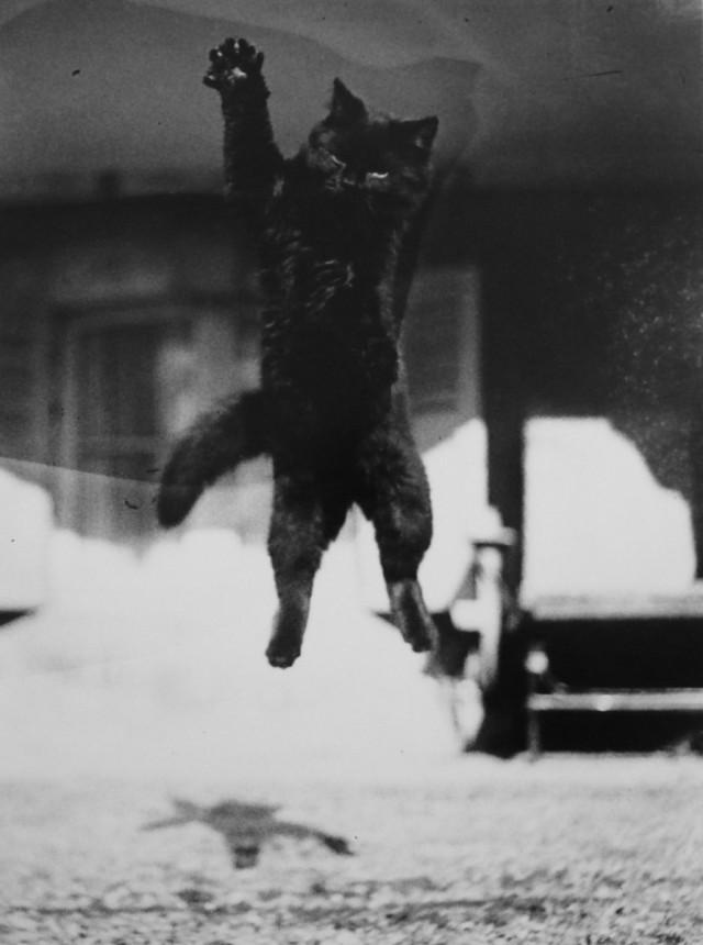 По, декабрь, 1912. Фотограф Жак Анри Лартиг