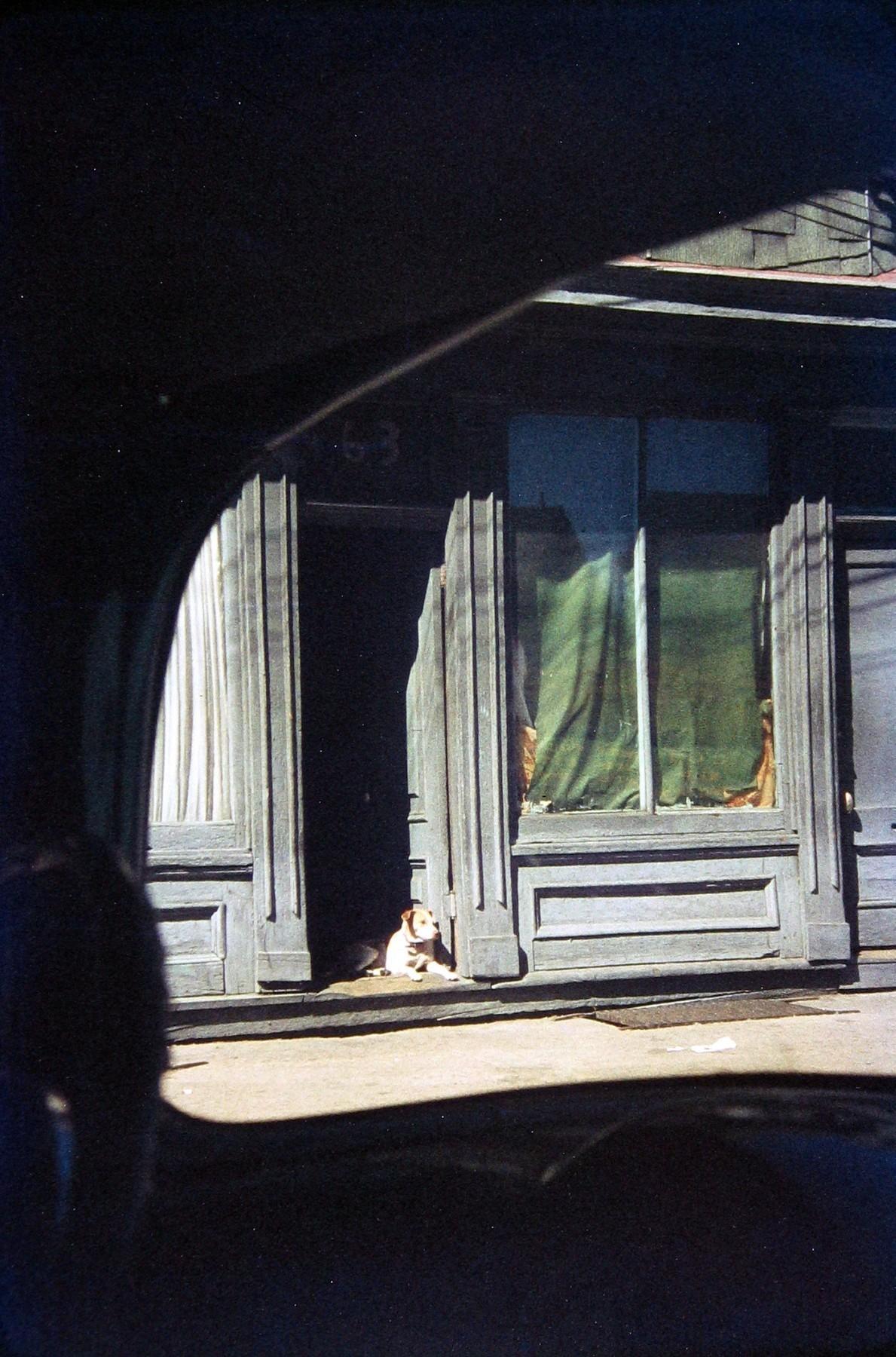Собака в дверях, Патерсон, 1952. Фотограф Сол Лейтер