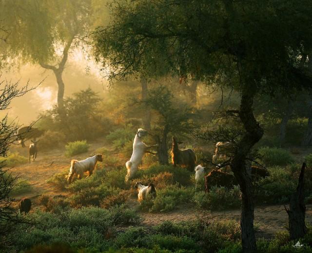 «Пастораль с козами и фантастическим светом». Автор imankitty