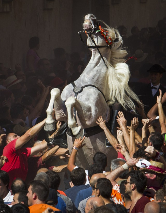 Лошадь, вставшая на дыбы в толпе. Автор wytworny