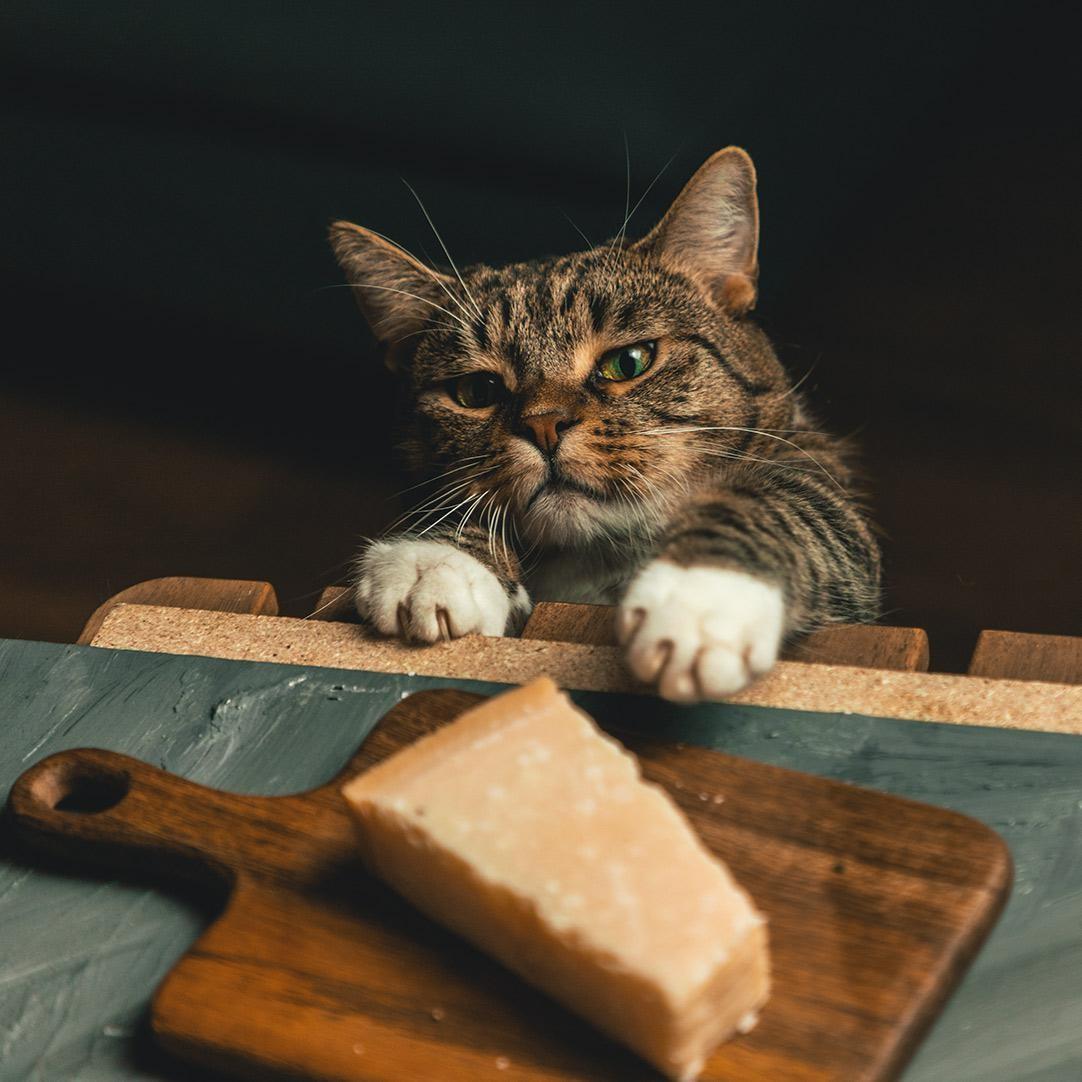 «Наш кот пытается украсть сыр». Автор Openminded_skeptic