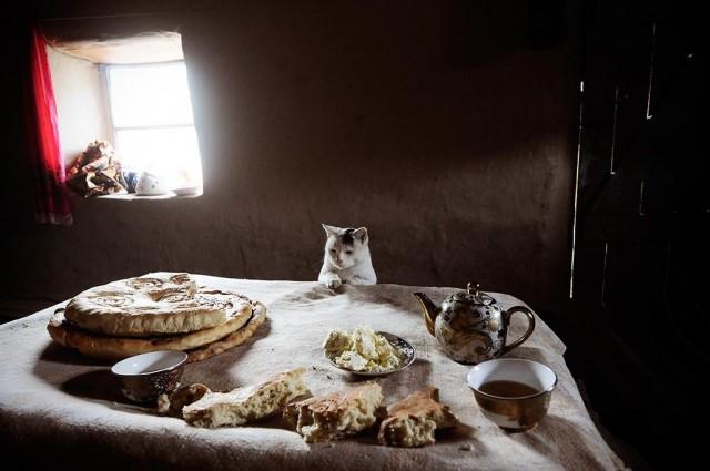 Тоскливый взгляд на лепёшки. Автор Леонид Плоткин
