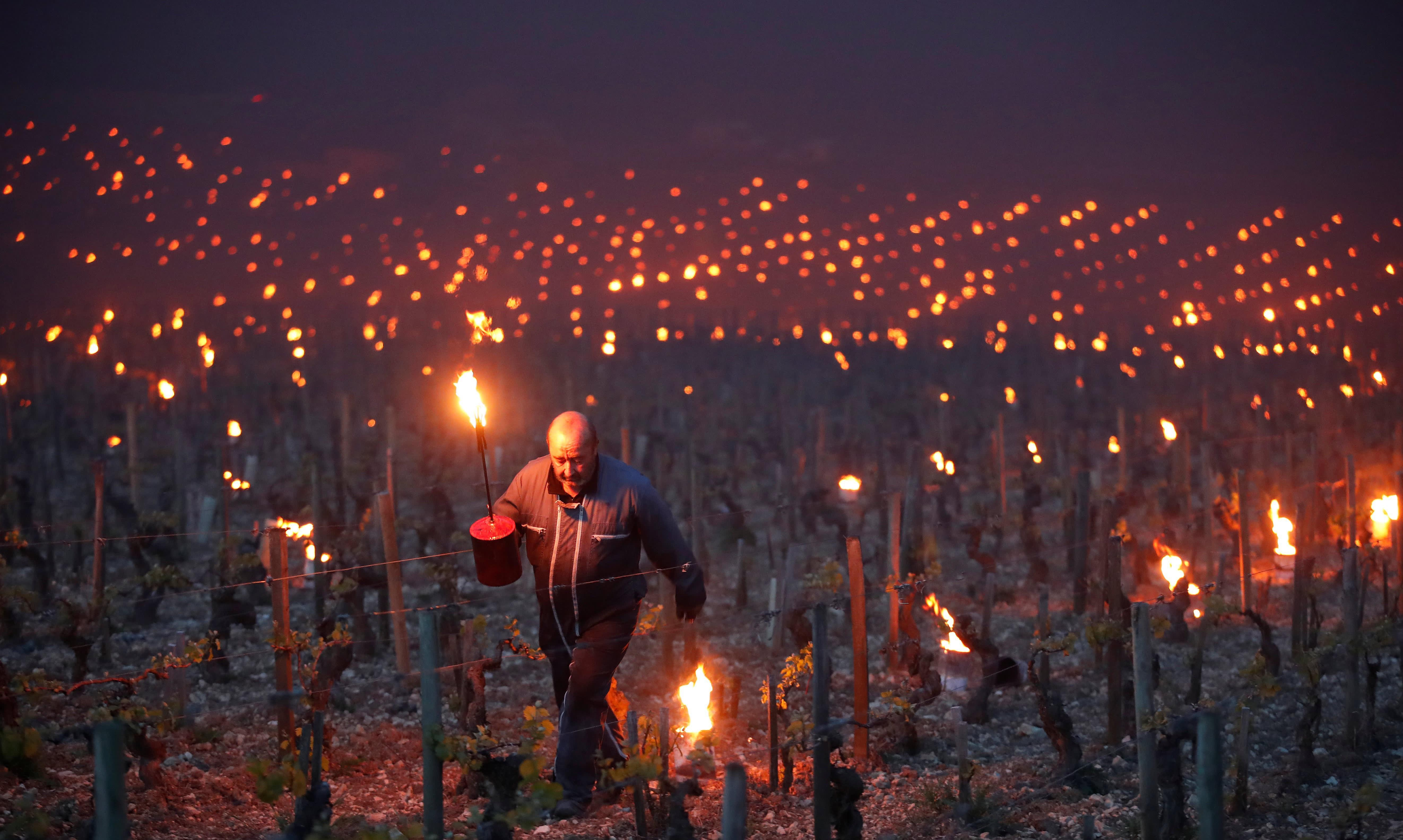 Из-за аномальных холодов в начале апреля фермеры Франции разжигают костры и факелы, чтобы спасти виноградники. Фотограф Кристиан Хартманн