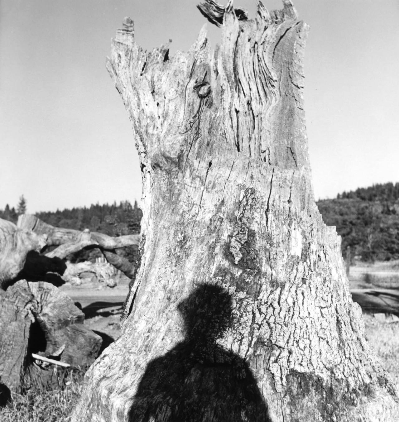 Автопортрет в Грэйс-Вэлли, 1946. Фотограф Имоджен Каннингем