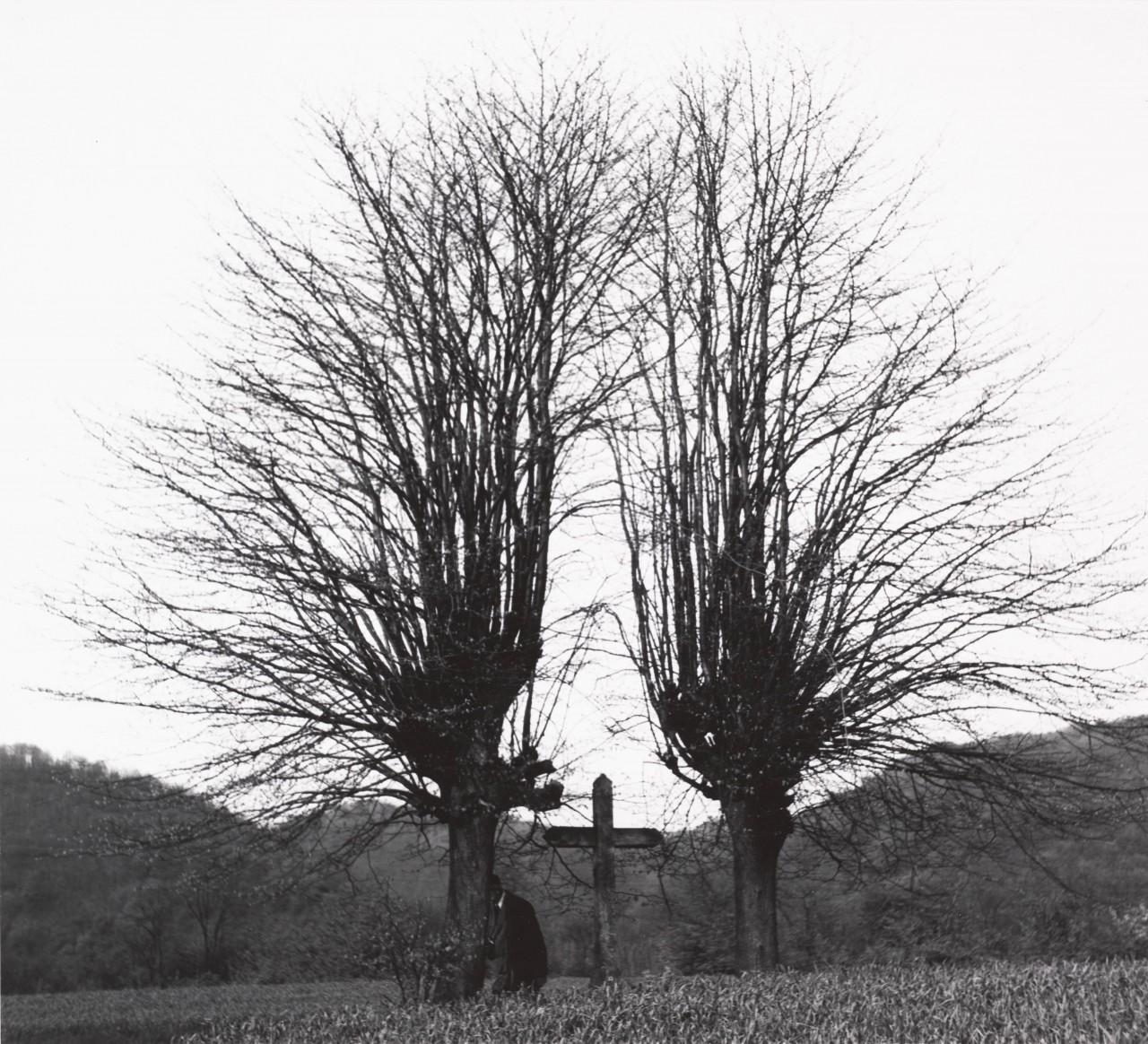 Кладбище во Франции, 1961. Фотограф Имоджен Каннингем