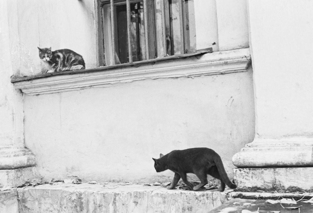 Коты, Москва, 1977