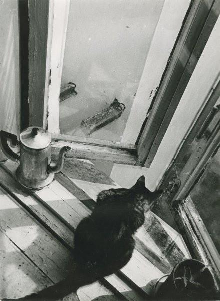 Кошка, 1965–1970