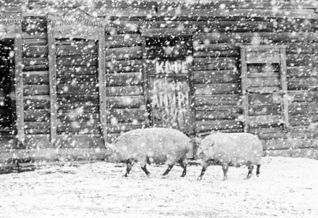 Совхоз «Приамурский пограничник», 1969. Фотограф Игорь Пальмин