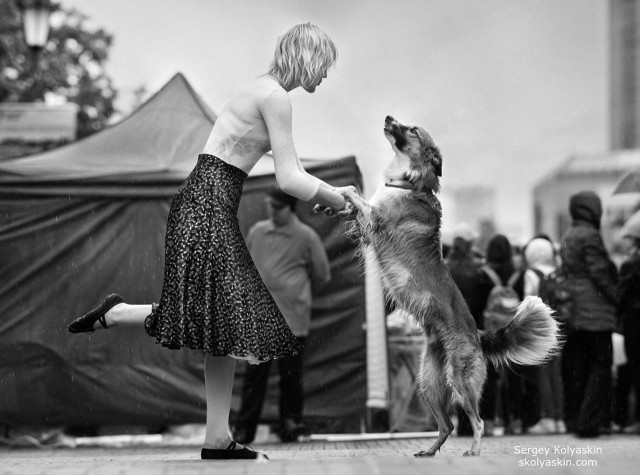 Dog waltz for the lady with the dog. Photographer Sergey Kolyaskin