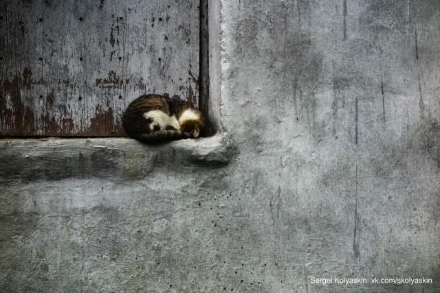 Squared cat. Photographer Sergey Kolyaskin