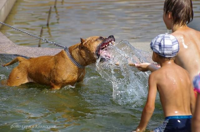 Children's fun. Photographer Sergey Kolyaskin