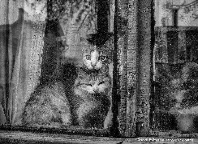 The cat and the cat are sitting on the window. Photographer Sergey Kolyaskin