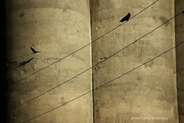 Elevator. Photographer Sergey Kolyaskin
