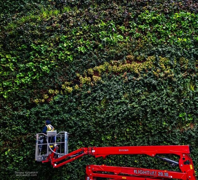 Green Wall, London. Photographer Sergey Kolyaskin