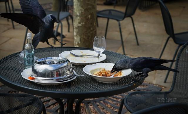 Lunch in London. Photographer Sergey Kolyaskin