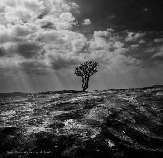 Great tree, India. Photographer Sergey Kolyaskin