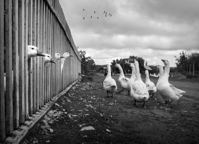 Философия свободы. Фотограф Сергей Коляскин
