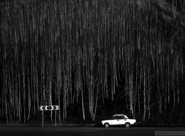 Фотографика леса. Фотограф Сергей Коляскин