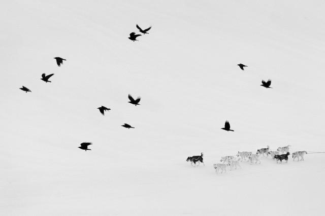 Герои Арктики. Фотограф Рагнар Аксельссон