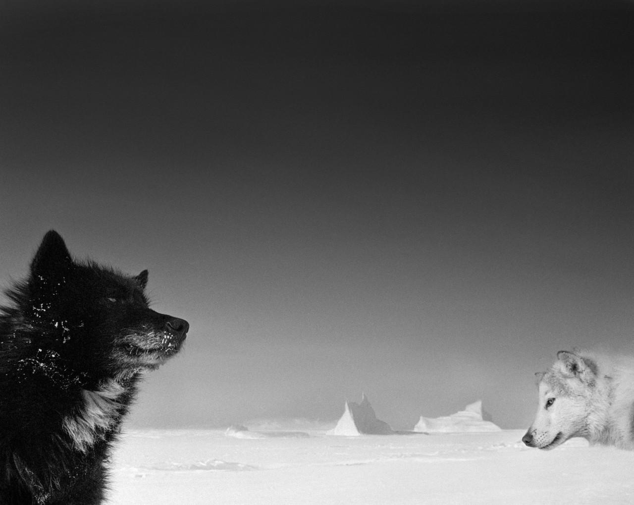 Последние дни Арктики. Фотограф Рагнар Аксельссон