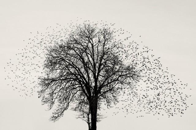 Чёрное Солнце. Фотограф Сорен Солкер
