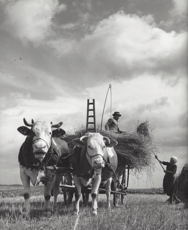 Фермеры, Германия, 1960-е. Фотограф Кис Шерер