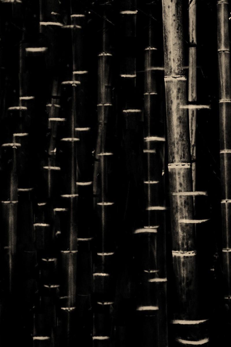 Бамбук, 2016. Фотограф Пол Купидо