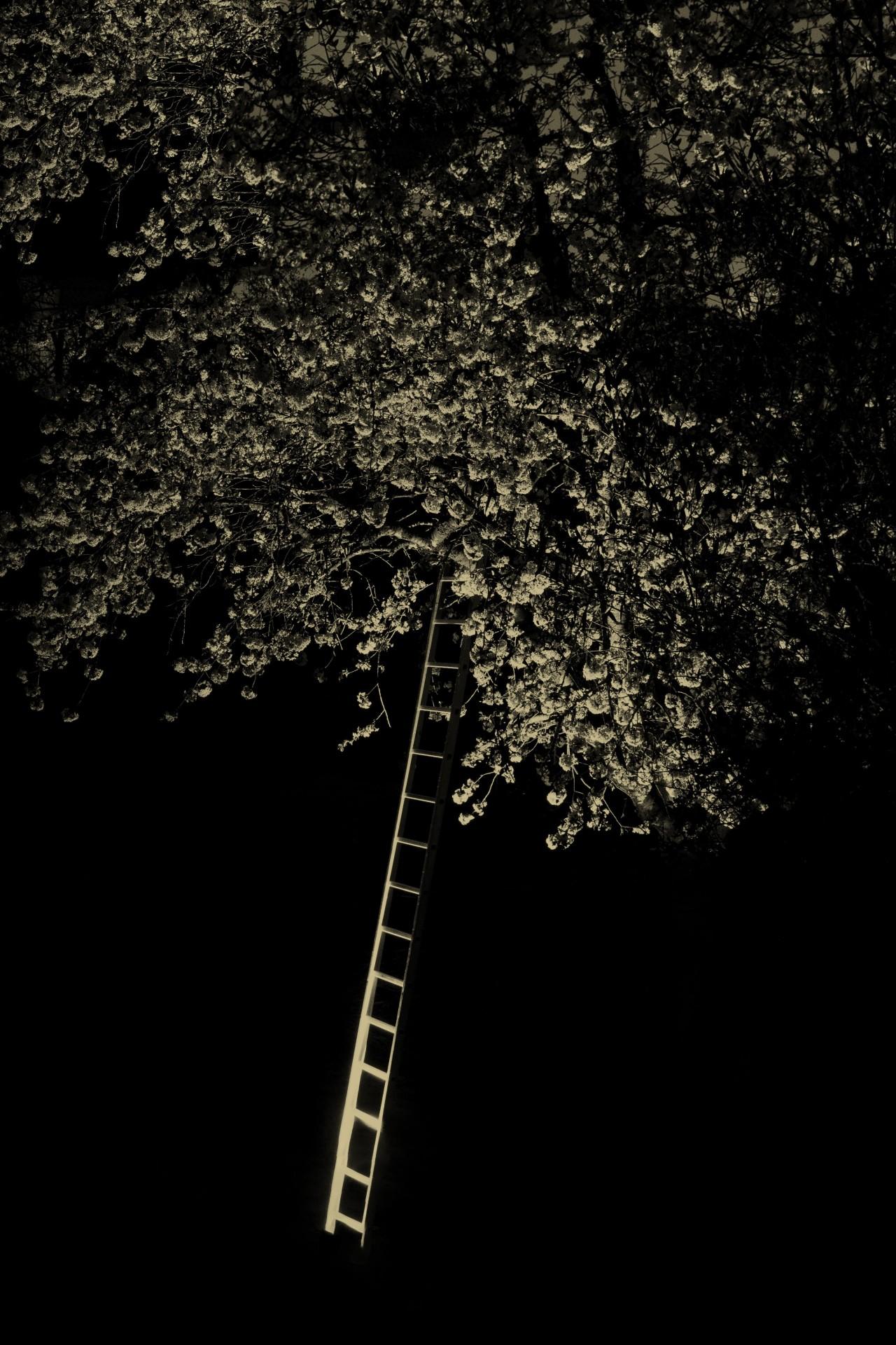 Лестница к дереву, 2019. Фотограф Пол Купидо