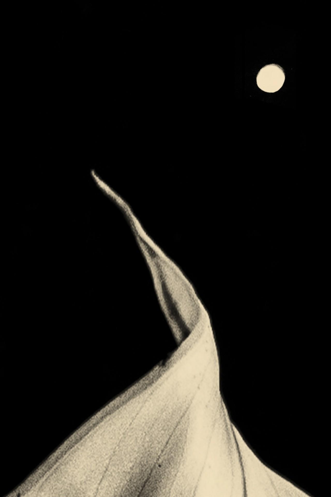 Лунная зависимость, 2018. Фотограф Пол Купидо