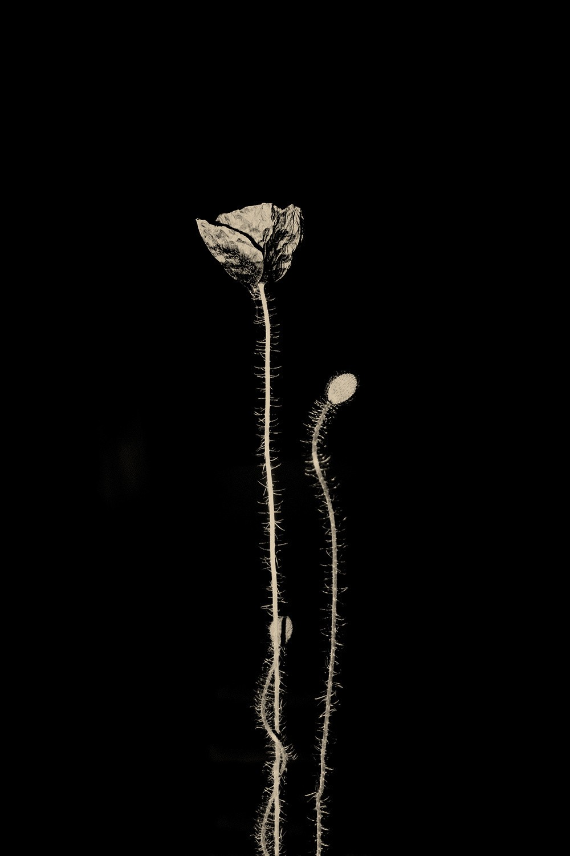 Мак, 2019. Фотограф Пол Купидо