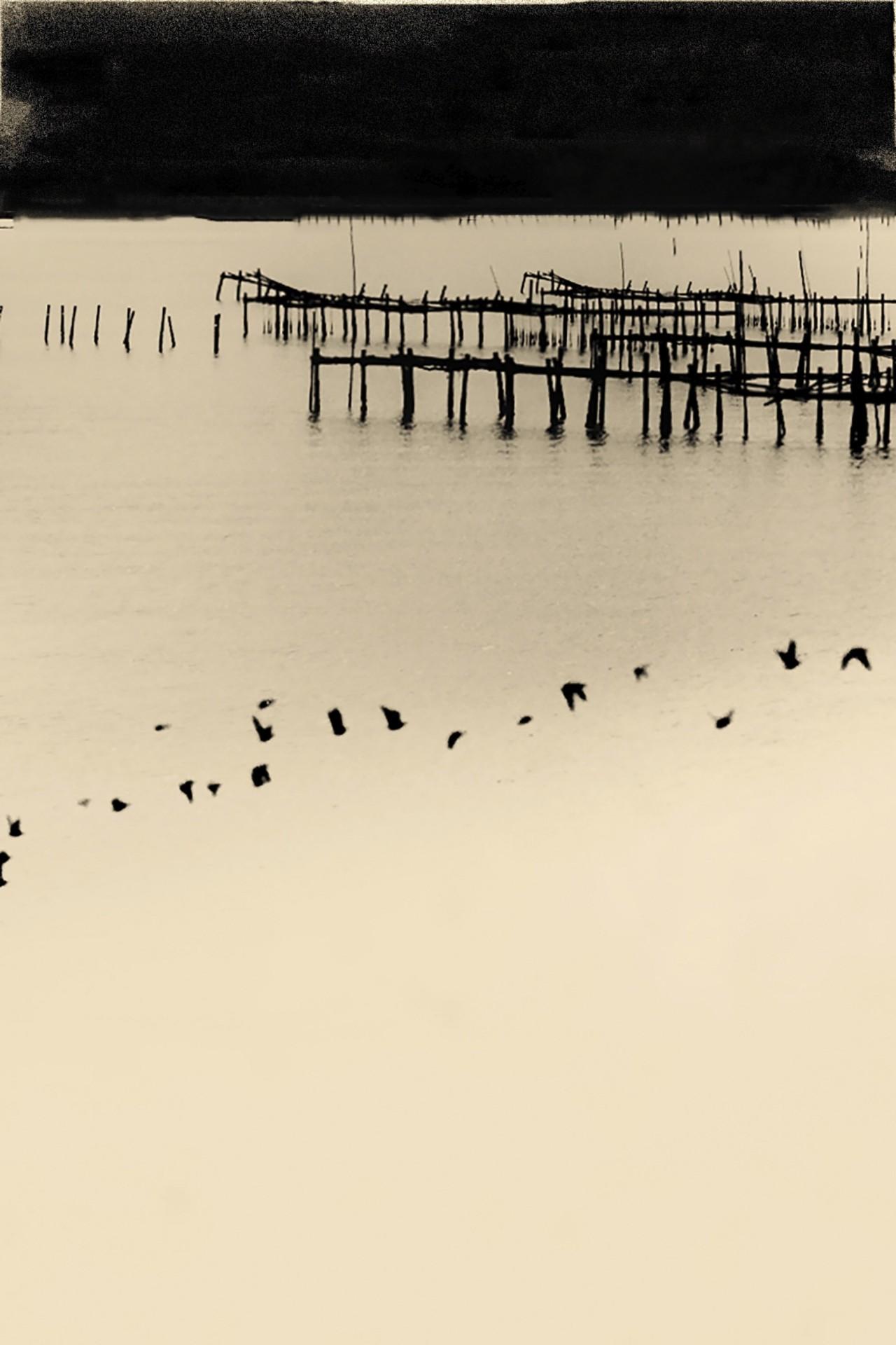Мацусима, 2019. Фотограф Пол Купидо