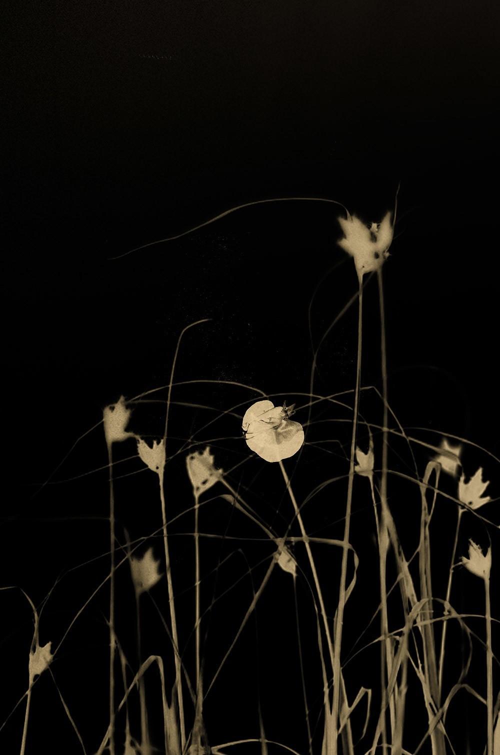 Цветы дюн, 2018. Фотограф Пол Купидо