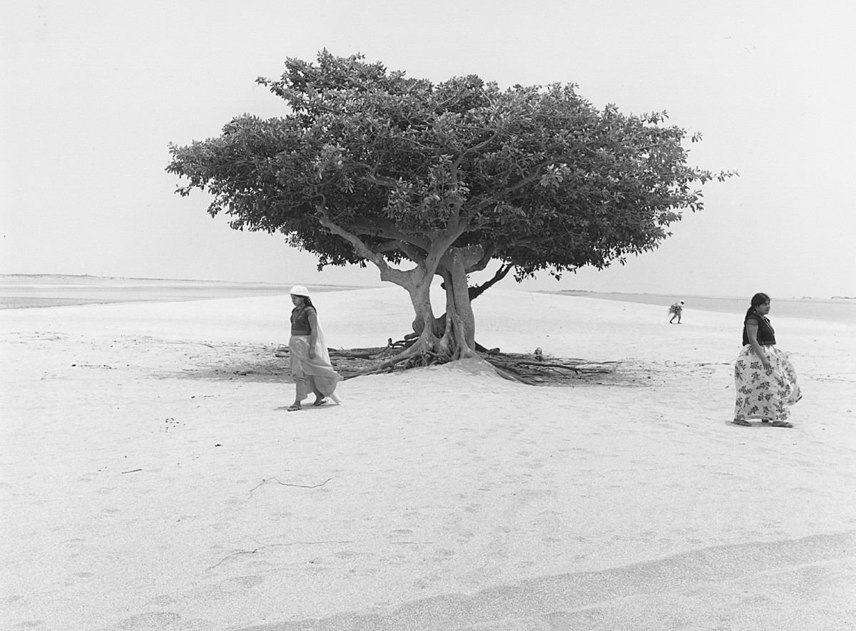 Дерево жизни, Мексика, 1982. Фотограф Флор Гардуньо