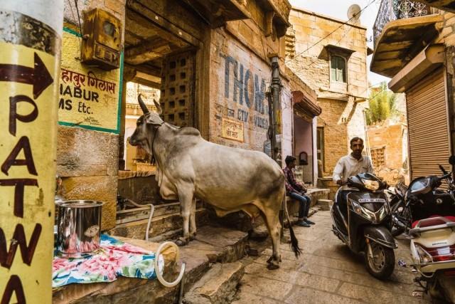Финалист, 2020. Корова заглядывает в магазин портного. Джайсалмер, Раджастхан, Индия. Фотограф Элизабет Брукс