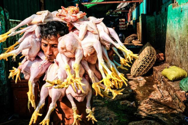 Финалист, 2021. Мужчина с курами, Янгон, Мьянма. «Эта фотография описывает реальную жизнь многих людей, кто борется лишь за то, чтобы поесть и выжить». Фотограф Thaw Aung
