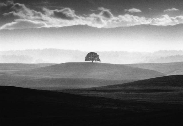 Дерево. Фотограф Роман Лоранк
