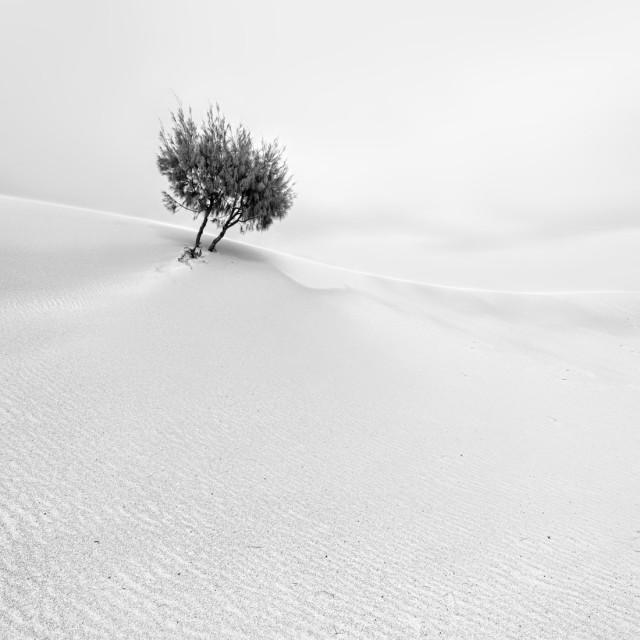 «Соло». Деревце в дюнах. Фотограф Аллен Коппе