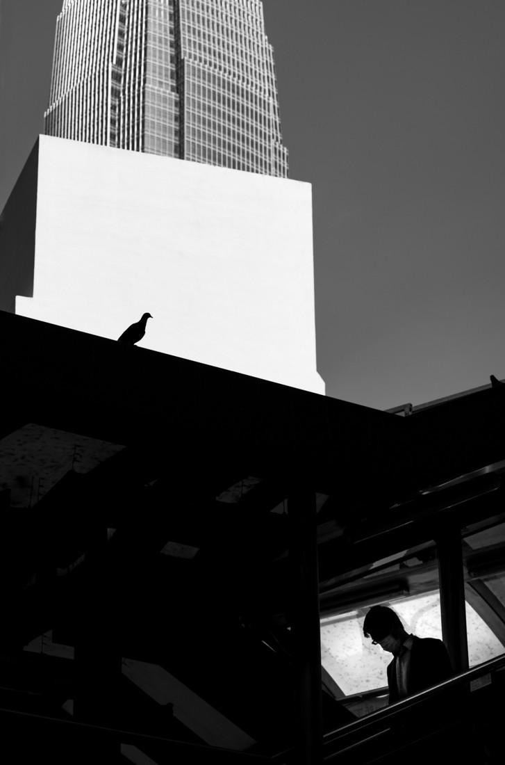 Голубь в Гонконге. Фотограф Джейсон Ау