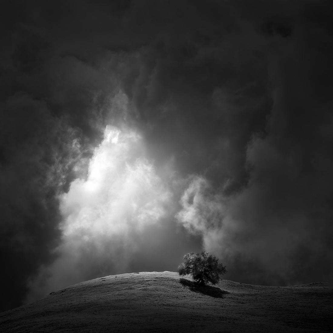 Дерево и свет сквозь облака. Фотограф Натан Вирт