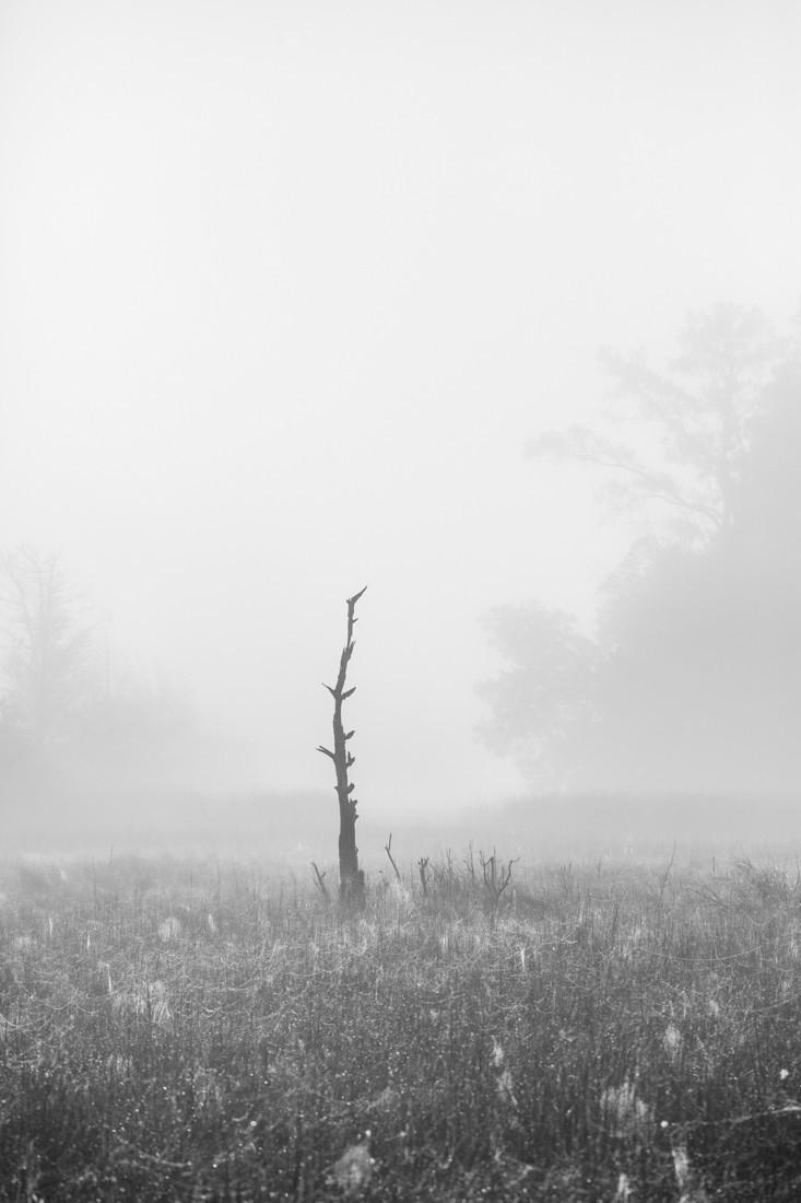 Дерево. Округ Ланкастер, Виргиния, ноябрь 2020 года. Фотограф Кейт Гай