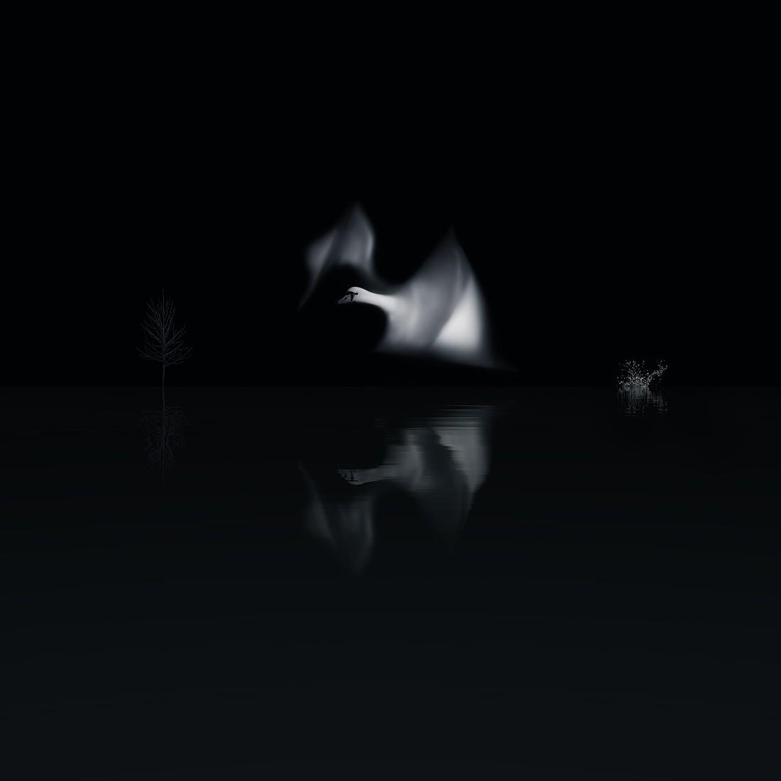Летящий лебедь. Фотограф Дэвид Сюй